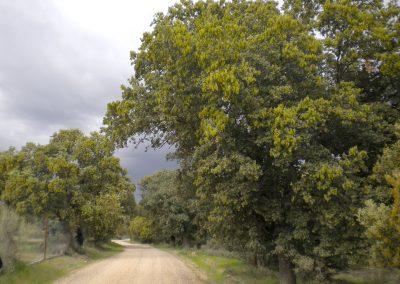 Senda del Duero GR-14